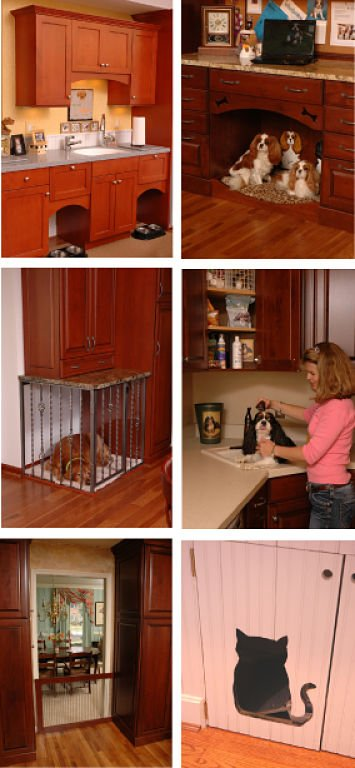 Pet When Remodeling